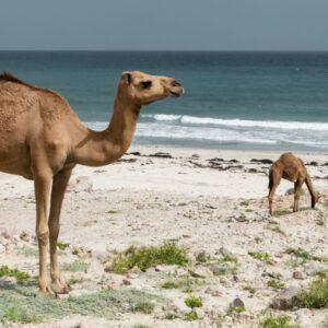صادرات زعفران به عمان