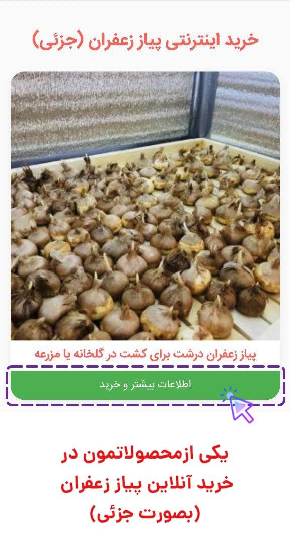 خرید آنلاین پیاز زعفران درشت