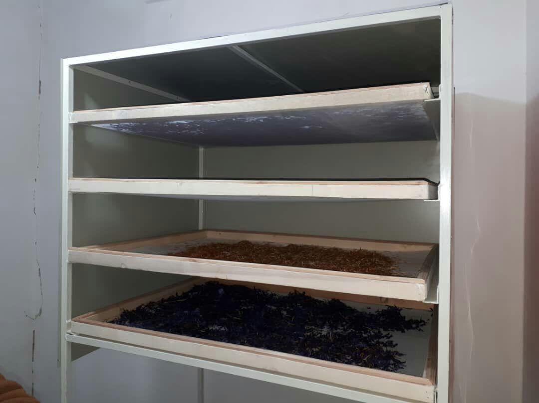 خشک کردن زعفران به صورت سنتی
