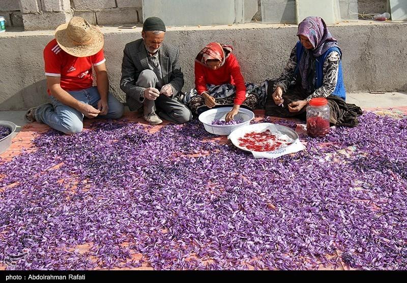 پاک کردن زعفران