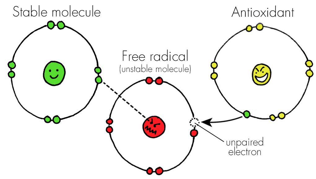 آنتی اکسیدان های موجود در زعفران