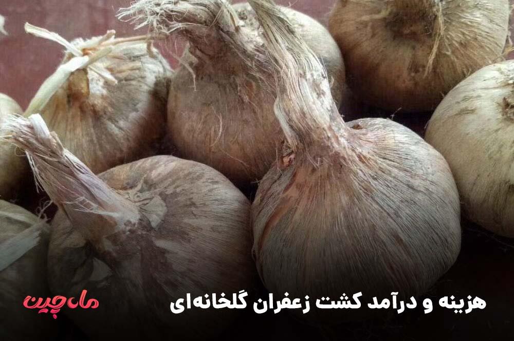 هزینه و درآمد کشت زعفران گلخانه ای