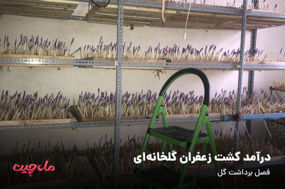 درآمد کشت زعفران گلخانه ای